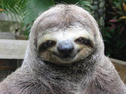 happy-smug-sloth