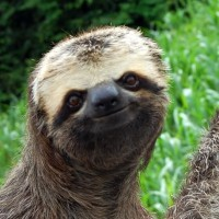 10 Pictures of Sloths That Will Make You Wonder