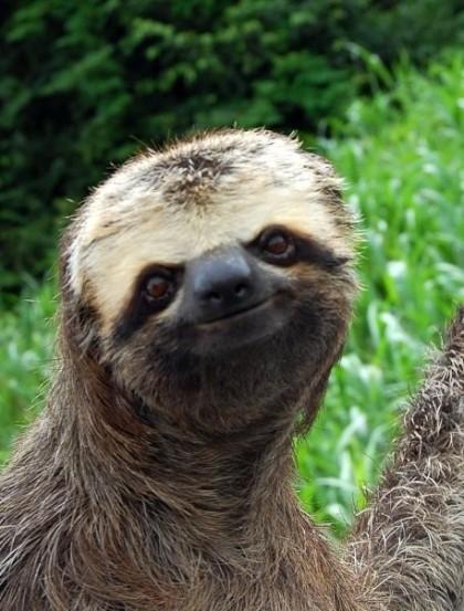 happy+sloth