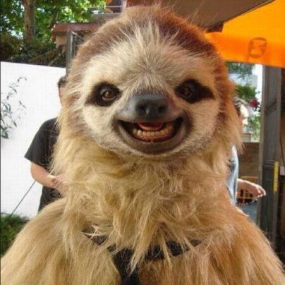 ridiculously-photogenic-sloths-25