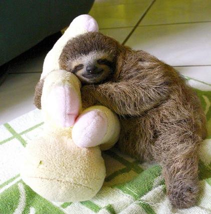 sweet+sleeping+baby+sloth+lucy+cooke++IIHIH
